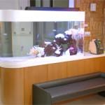 熱帯魚泳ぐ水槽